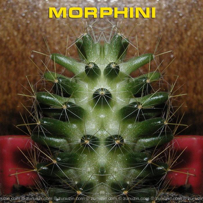 Original art poster - Morphini