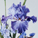 Fragment - Irises and peonies